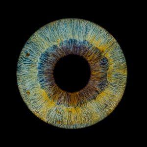 ZK-MEDIEN ‣ Irisfotografie